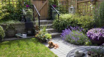 kutyabarát kert